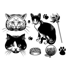Hand drawn style cat collection vector