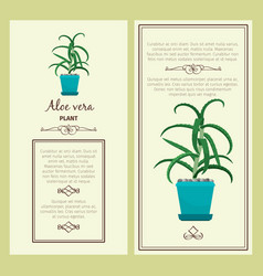 Greeting card with aloe vera plant vector