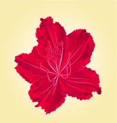 Red flower simple rhododendron vector