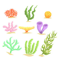 Set of cartoon underwater plants seaweeds and vector