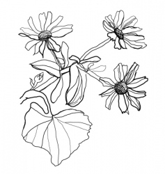 Drawing chamomile vector