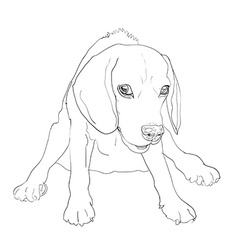 Adorable beagle on funny sitting pose vector