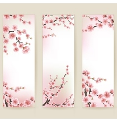 Cherry blossom realistic banner EPS 10 vector image