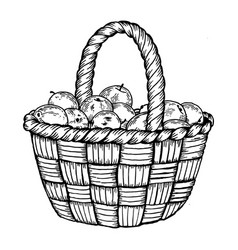 basket with apples engraving vector image vector image
