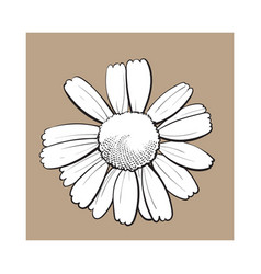 open chamomile blossom top view sketch style vector image vector image