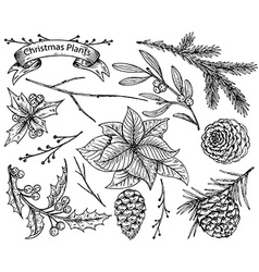 Set of hand drawn winter plants vector image vector image