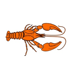 Color crawfish vector