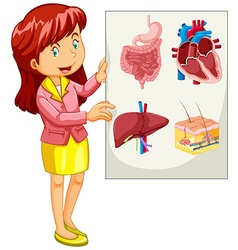 Woman presenting chart of organs vector image