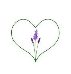 Beautiful violet lavender in a green heart shape vector