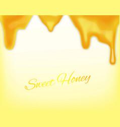 dripping honey vector image
