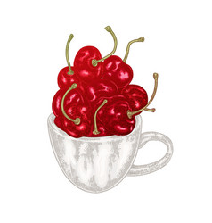 hand drawn cherry in mug fruit vector image vector image