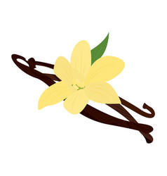 vanilla pod with flower vector image