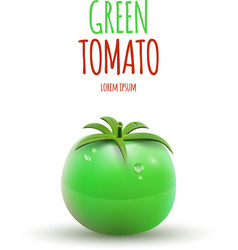 Green tomato isolated on white background vector