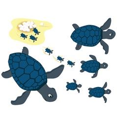 blue turtles vector image