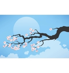 Branch of blooming cherry vector image