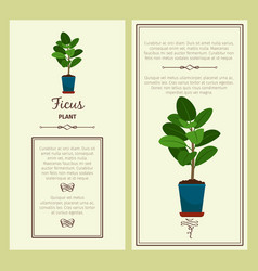 Greeting card with ficus plant vector