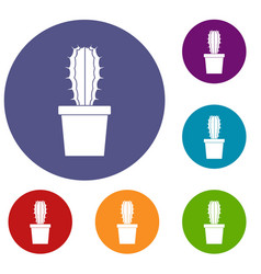 Cactaceae cactus icons set vector