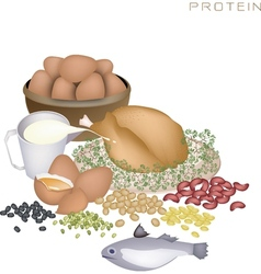 Health and nutrition benefits of protein foods vector