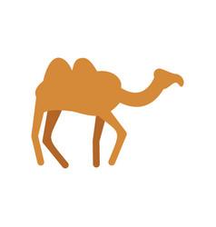Camel isolated desert animals on white background vector