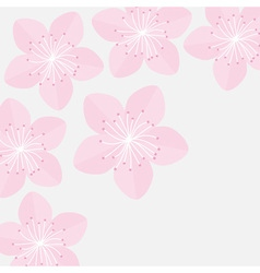 Sakura flowers japan blooming cherry blossom vector