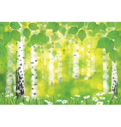 Forest spring vector