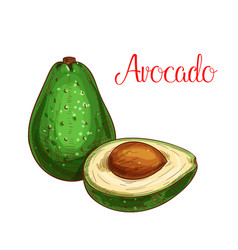avocado tropical fruit sketch icon vector image