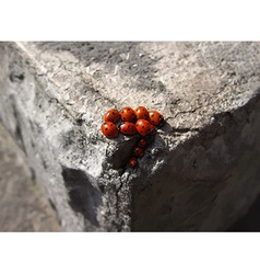 Family of ladybugs vector image