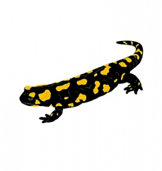 fire salamander vector image vector image