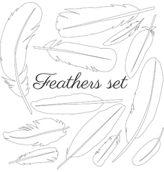 Collection of isolated flat style bird feathers vector