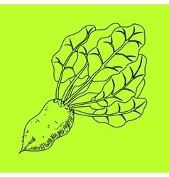 Mangelwurzel a root vegetable line vector
