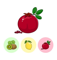 Fruit icons pomegranate lemon  kiwifruit vector