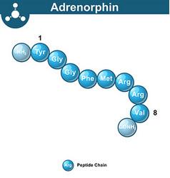 Adrenorphin abstract model amino acid sequence vector