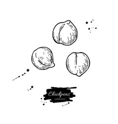 Chickpeas hand drawn  isolated vector