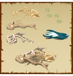 Skeletons of different fish and other items vector