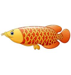 Arowana fish vector