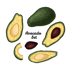 Hand drawn engraved colorful avocado set isolated vector