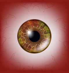 Red eye scary bloody realistic eyeballs spooky vector