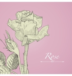 Hand drawn blomming rose with bud isolated vector