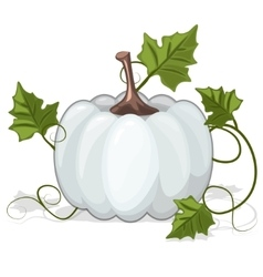 Autumn white pumpkin vegetable vector