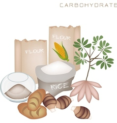 Health and nutrition benefits of carbohydrate foo vector