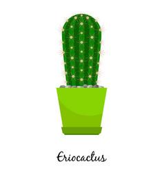 eriocactus cactus in pot vector image vector image