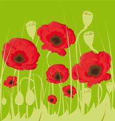 poppy flowers on green background vector image vector image