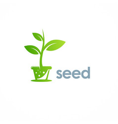 seed plant logo vector image