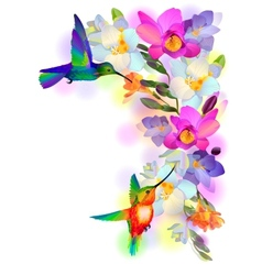 Rainbow humming-birds with freesia flowers vector image