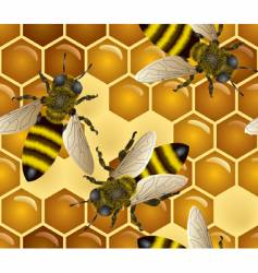 honey bees pattern vector image