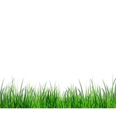 Grass green border vector
