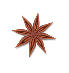anise star seed isolated on white vector image vector image