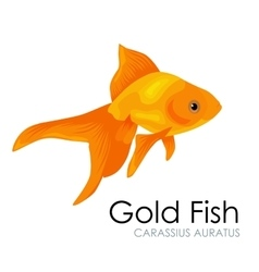 Aquarium Gold Fish isolated on vector image