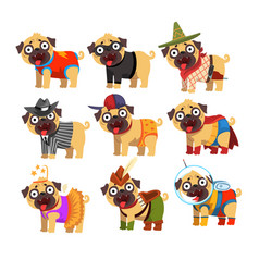 Cute funny pug dog character in colorful funny vector
