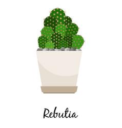 rebutia cactus in pot vector image vector image